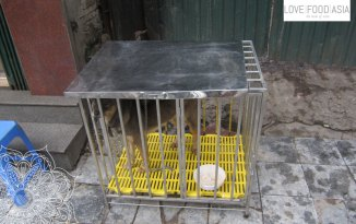 A gog in a cage in Hanoi