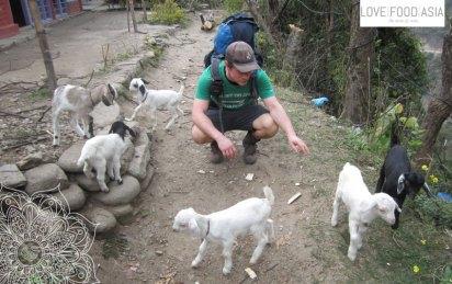 Matthias und die Ziegen