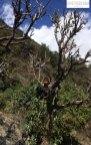 Ein Junge spielt im Baum