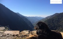 A dog enjoying the view