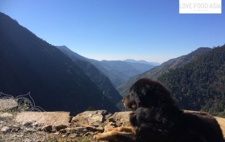 A dog enjoying the view