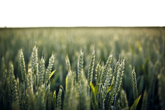 nature-field-agriculture-farm