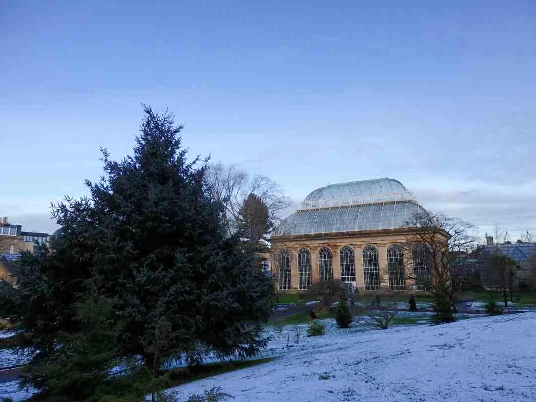 Edinburgh Botanic Gardens 11