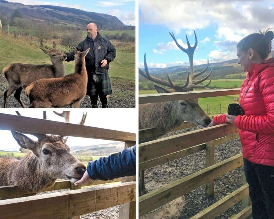 Highland Safaris Red Deer