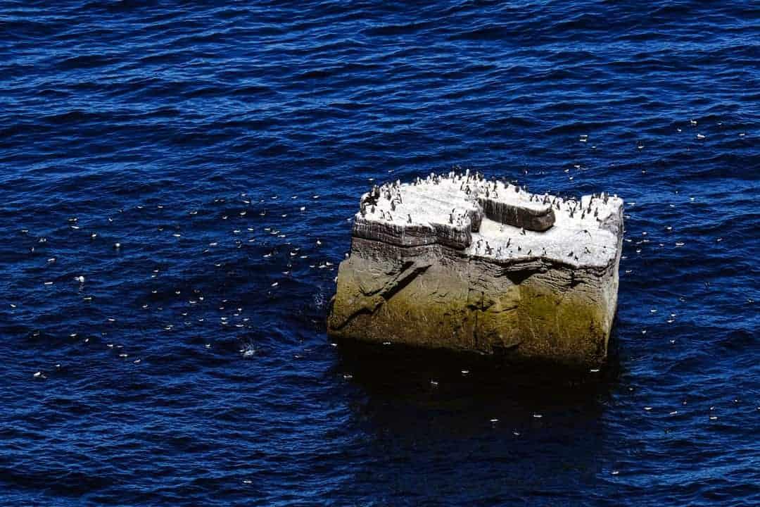 Seabirds Handa Island
