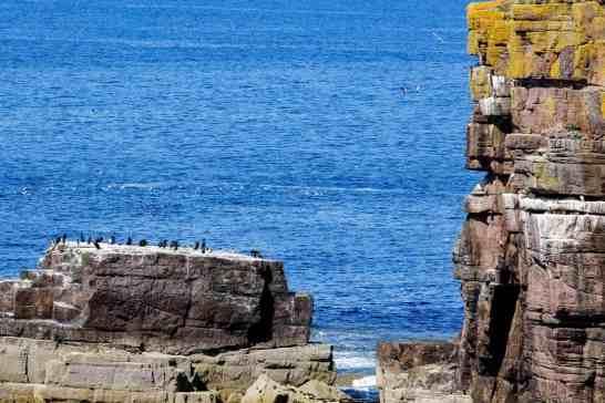 Handa-seabirds-cliffs