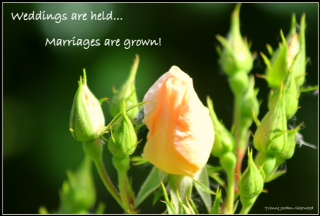 Wedding are held. Marriages are grown