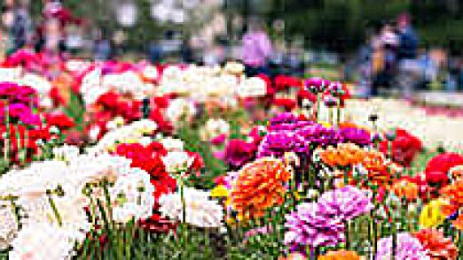 flowers sq
