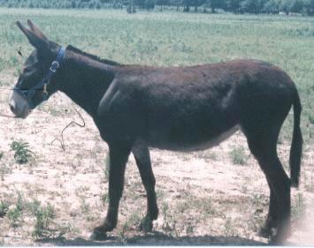 All About Donkeys