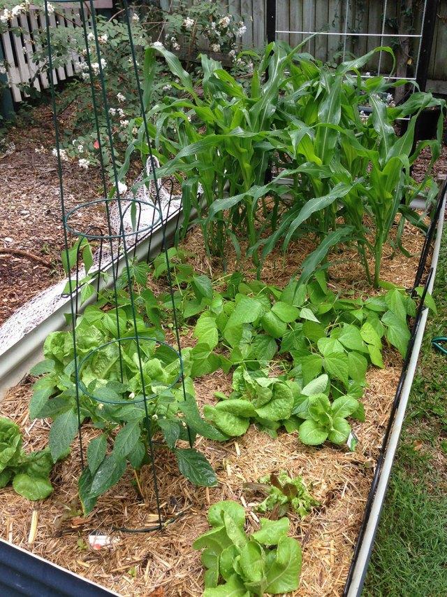 Garden Update - week 3