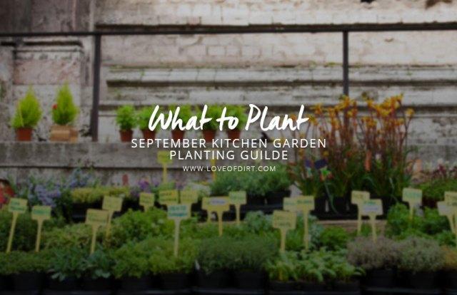 What to plant in september kitchen garden