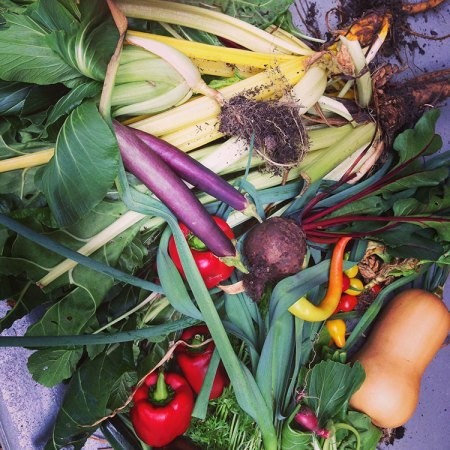 Vege Gardens and renting