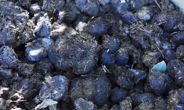 Horse Manure - Fertiliser for your vegetable garden