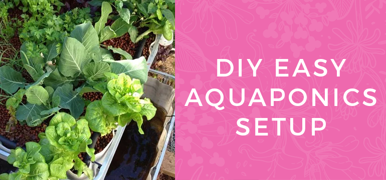 DIY Easy Aquaponics Setup