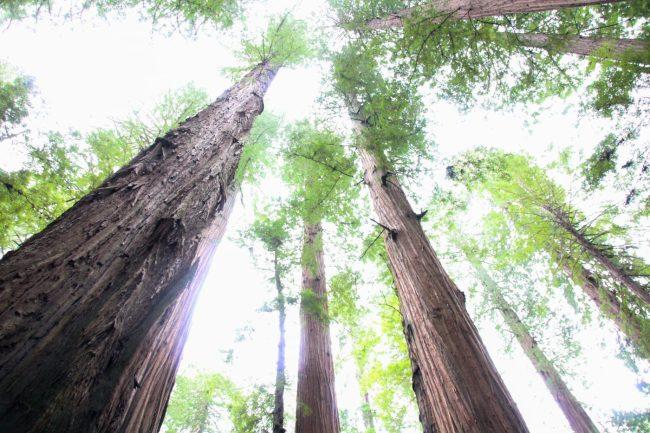 Exploring Lower Humboldt County Redwoods
