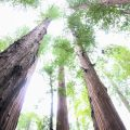 Exploring the HUmboldt County Redwoods