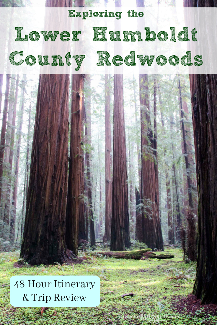 Exploring the Lower Humboldt County Redwoods parks while staying in Eureka, CA. 48 hour trip itinerary and review for a quick road trip to Northern California.