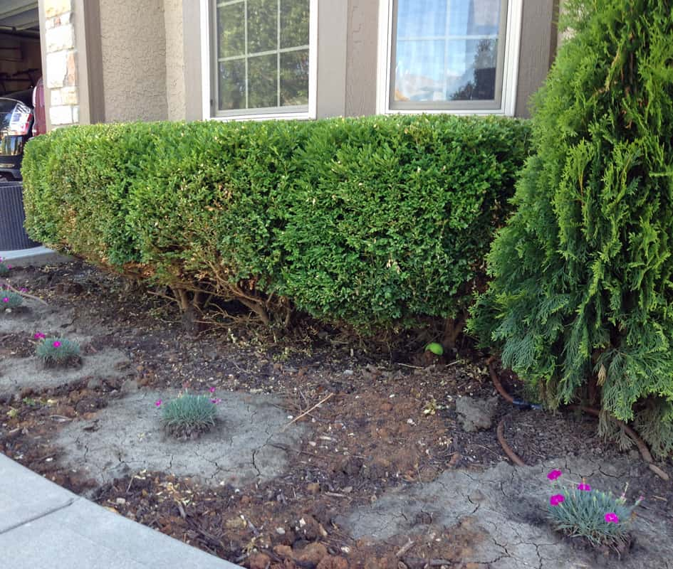 Ideas for front yard landscaping