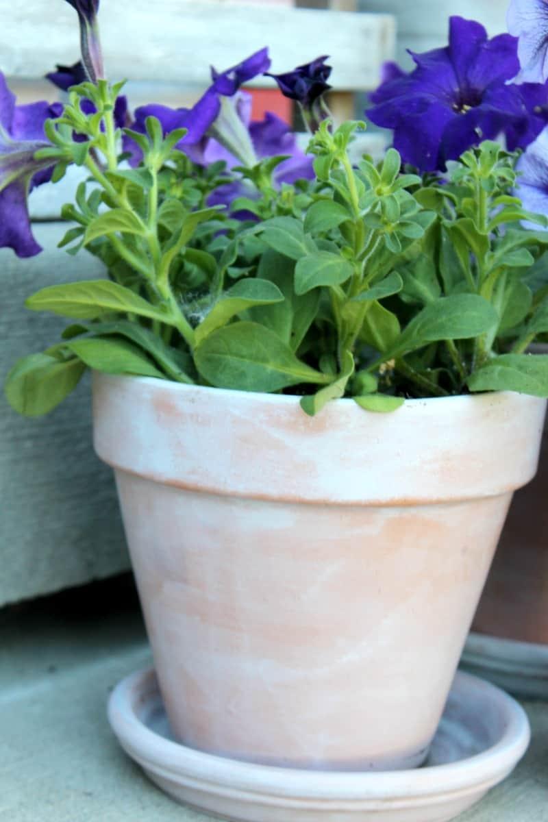 White washed terra cotta pot tutorial, terra cotta pots, white washed terra cotta pots