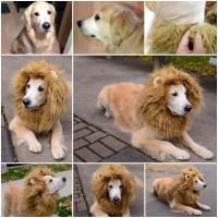 homemade lion costume dog diy cozy fleece dog coat ...