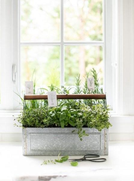 grow a successful indoor herb garden