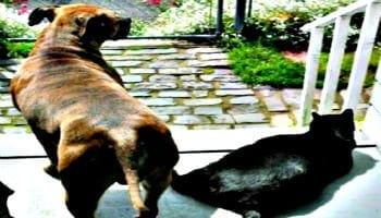 Beloved pets who has crossed over to the Rainbow Bridge