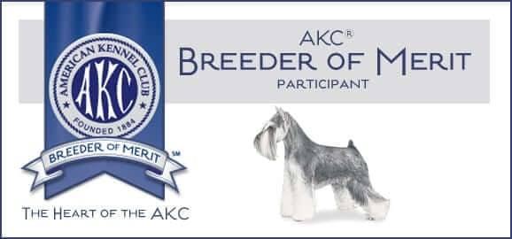 Reberstein's Miniature Schnauzers AKC Breeder Of Merit
