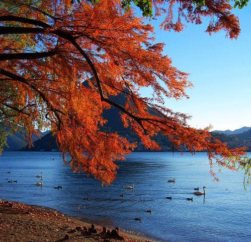 Leaves Fall Desktop Wallpaper Wallpapere Pentru Desktop Peisaje Superbe Pentru Toamna