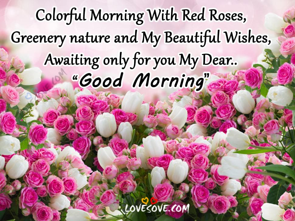 Colorful Morning With Red Roses, Good Morning Wishes Images