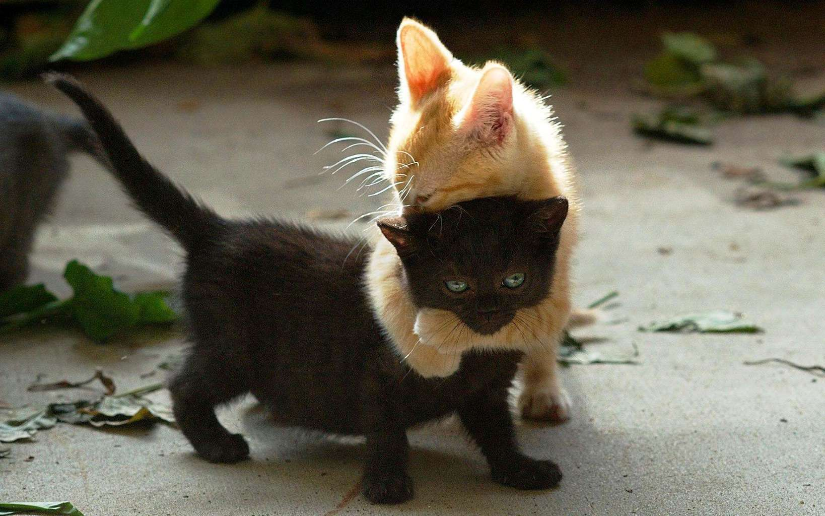 Cute Boy And Girl Friendship Wallpapers Sweet Friendship Wallpapers Lovesove Com