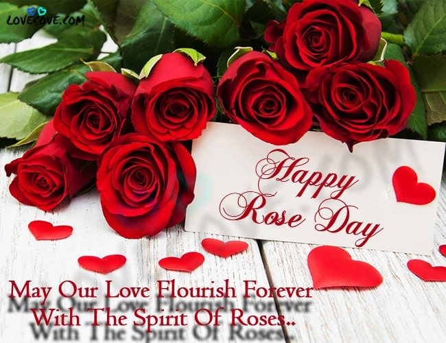 rose day shayari, happy rose day, happy rose day shayari, red rose shayari in english, rose day quotes, rose day status, rose day two line shayari, Rose day shayri, rose shayari in english, beautiful Rose sweet thuoght hindi & english, happy rose day hindi shayari, happy rose day meri jaan, happy rose day jaan wallpaper, happy rose day my love, happy rose day my love images, happy rose day pic, happy rose day pic with love u, red rose image with shayari