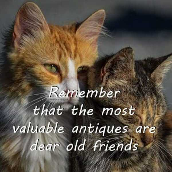 friendship quotes in english, best friend quotes in english