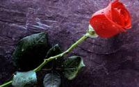 LOVE SPELLS THAT REALLY WORK FAST INSTANTLY