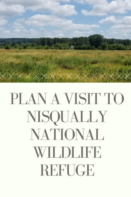 Nisqually National Wildlife Refuge is located between Tacoma and Olympia and is a great spot to watch for wildlife, take beautiful photographs and so much more.