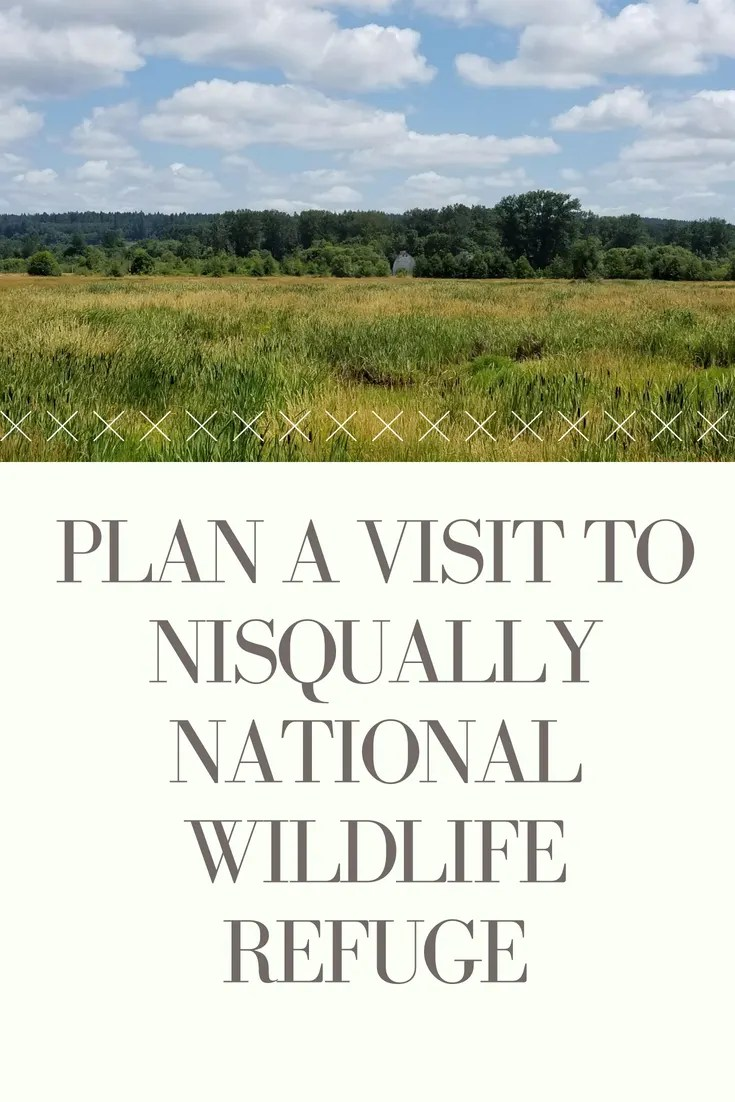 Plan a visit to Nisqually National Wildlife Refuge