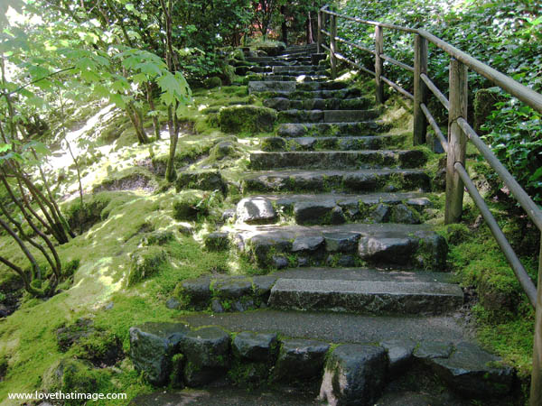 Rustic stone steps in green garden  Love That Image