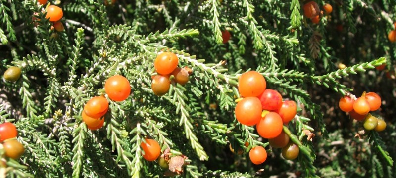 What to Do If You've Eaten Poisonous Plants or Berries
