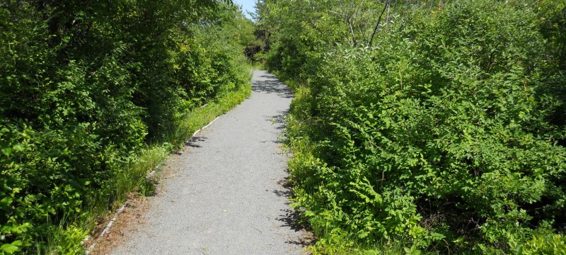 Hiking Wheelchair Accessible Trails