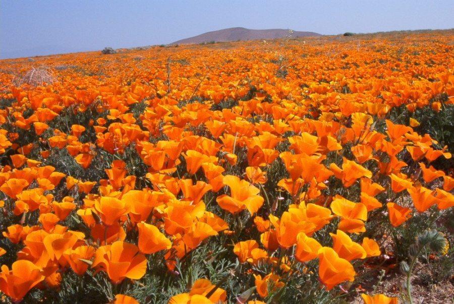 spring, wildflowers, hike