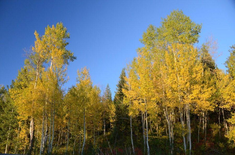 hikes, fall hikes, fall foliage, backcountry, autumn