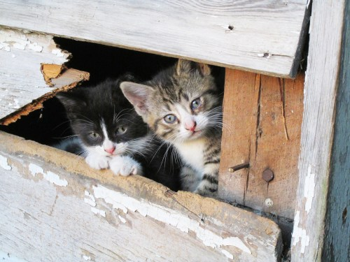 Cute kittens peeking out from an outdoor structure