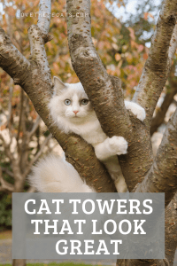 Read more about the article 9 Cat towers that look GREAT.