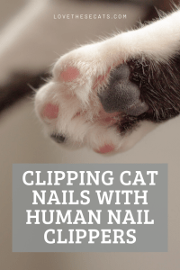Read more about the article How to Cut Cat Nails with Human Nail Clippers
