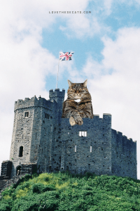Read more about the article 8 Delightful Cat Castles Your Feline Will Love