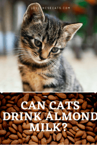 Read more about the article Can cats drink almond milk?