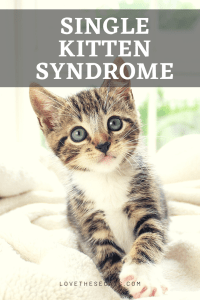 Read more about the article Preventing & Fixing Single Kitten Syndrome