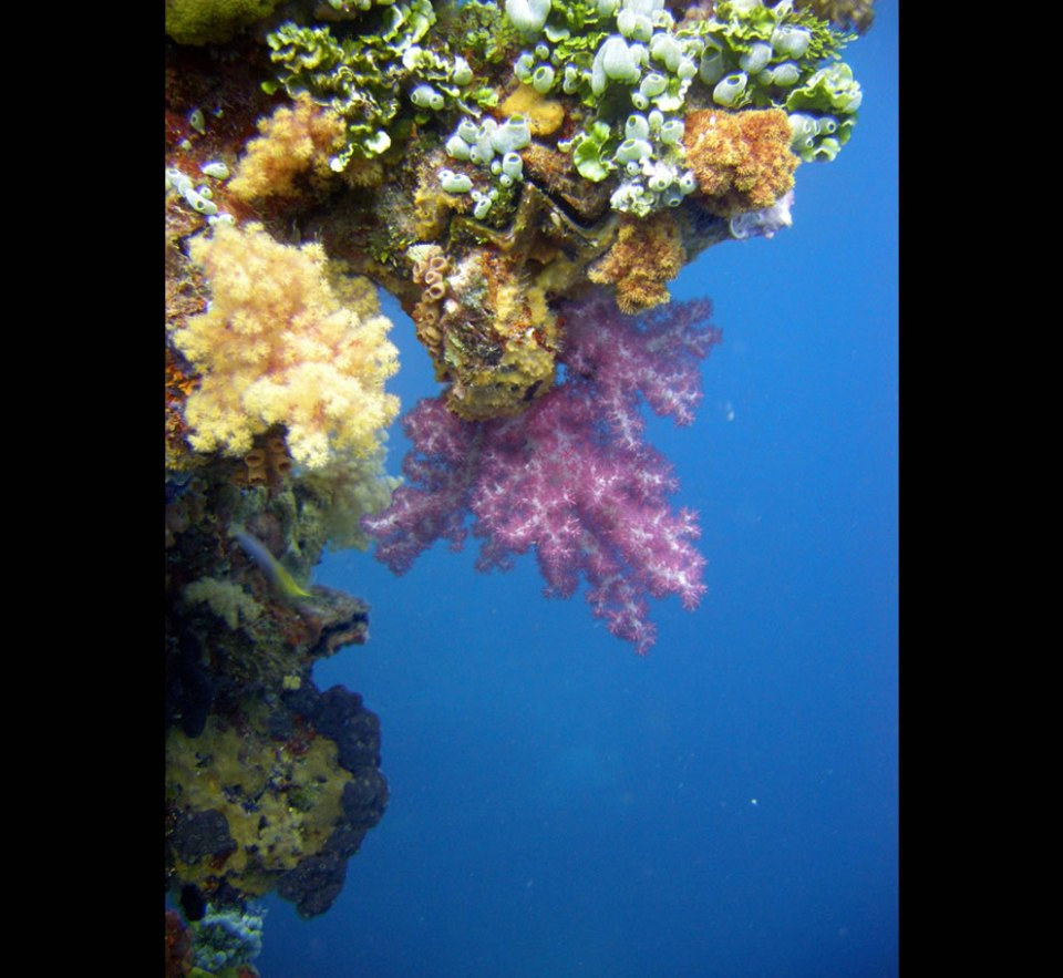Corals along the mast of the Sankisan Maru - Truk Lagoon