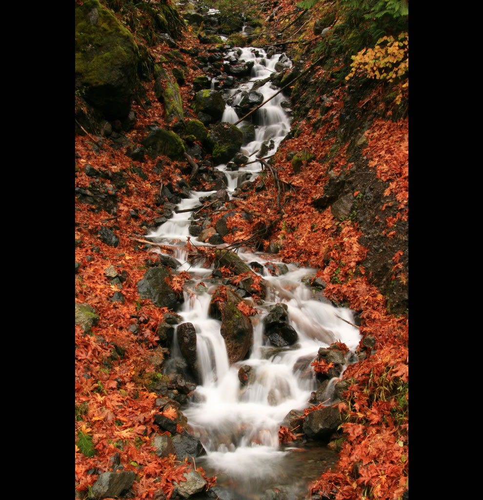 Fantastic Fall scene at Olympic National Park