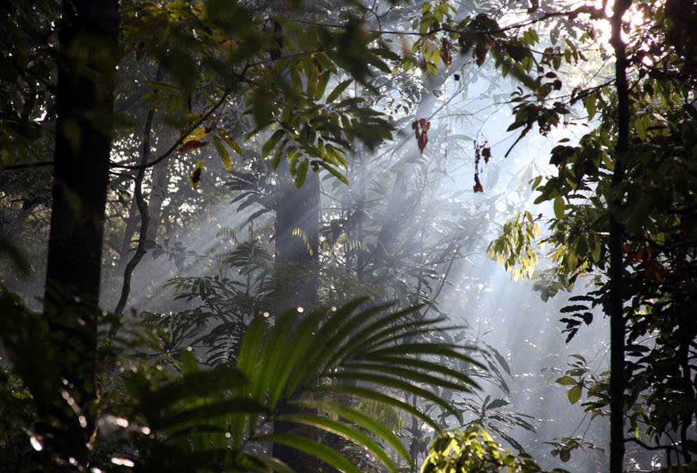 Streams of light in the Amazonian mist