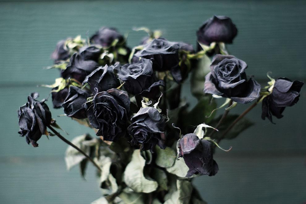 Image result for dead rose